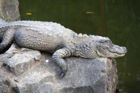 镇江到上海野生动物园-外滩-科技馆1晚2日游>上海2