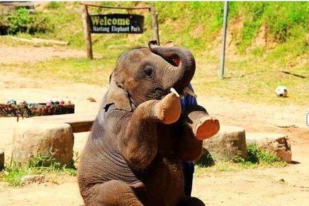 泰国清迈六天五晚家庭游>呆萌可爱的长颈鹿陪您共进
