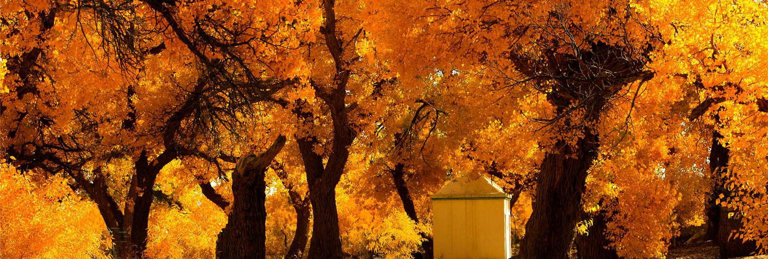 国内的秋天到底美成什么样