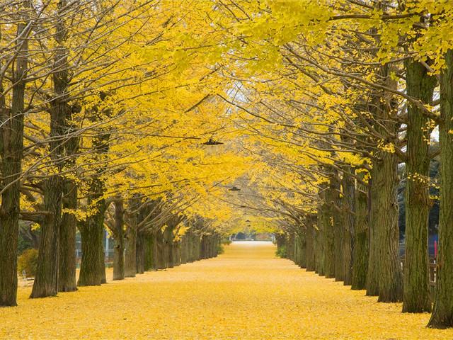 东京|国营昭和纪念公园